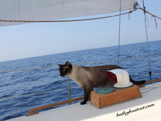Museum of Maritime Pets Ambassador at Sea